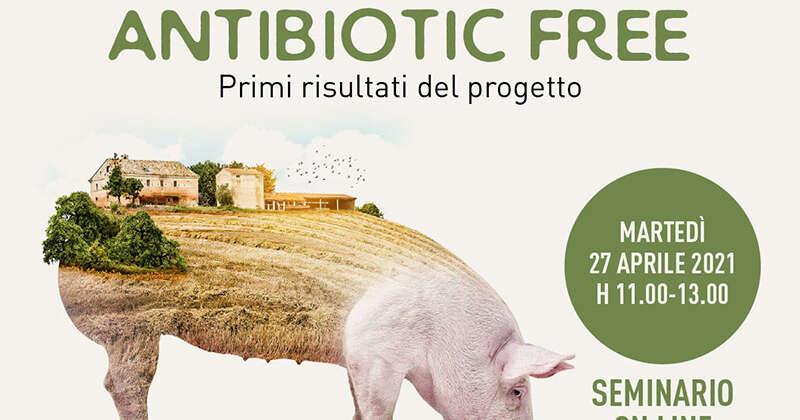Il suino antibiotic free nelle Marche